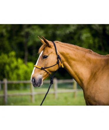 Licol éthologique et longe cheval EKKIA Fun colour equitation