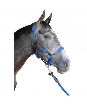 licol cheval cuir et nylon flags & cup