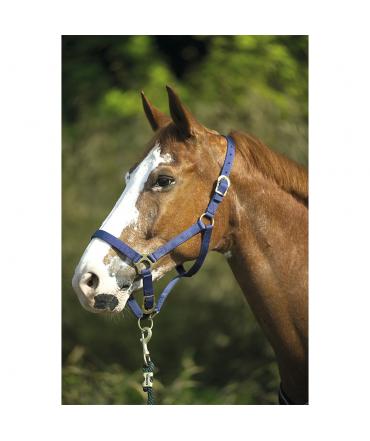 Licol nylon double épaisseur EKKIA cheval bleu