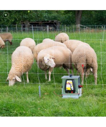 filet a mouton blanc